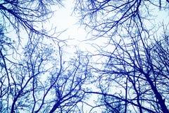 Ветви дерева зимы против неба Стоковое Фото