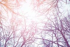Ветви дерева зимы против неба Стоковые Фотографии RF