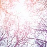 Ветви дерева зимы против неба Стоковое Изображение