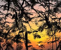 Ветви дерева и неба, Стоковая Фотография RF