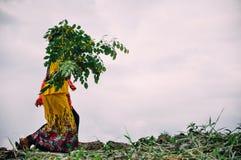 Ветви дерева костоеды женщины на озере Inle Стоковое Изображение RF