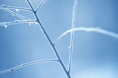 Ветви дерева, который замерли в льде Замороженная ветвь дерева в ветви леса зимы покрытой с снегом Стоковые Фото