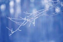 Ветви дерева, который замерли в льде Замороженная ветвь дерева в ветви леса зимы покрытой с снегом Стоковое фото RF