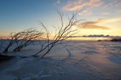 Ветви дерева на замороженном озере на восходе солнца Стоковые Изображения RF