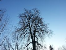 Ветви дерева на предпосылке неба Стоковое Изображение