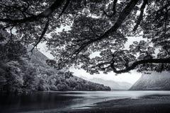 Ветви дерева обрамляют сценарное озеро Te Anau с заросшими лесом холмами на заднем плане в Новой Зеландии в черно-белом Стоковые Фотографии RF