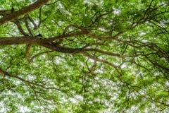 Ветви дерева от вниз к верхней части с лучем и блеску, всходу силуэта ветвей дерева Стоковые Изображения