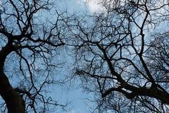 Ветви дерева пересекая Стоковые Изображения RF