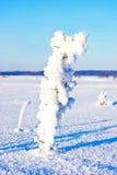 Ветви дерева покрытые с изморозью в зиме. Стоковое Изображение RF