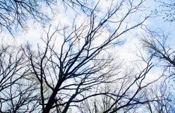 Ветви дерева против голубого неба с облаками Стоковые Изображения