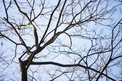Ветви дерева против голубого неба Стоковая Фотография RF
