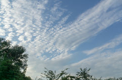 Ветви дерева против голубого неба Стоковое Изображение RF