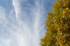 Ветви дерева против голубого неба Стоковое фото RF