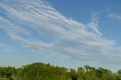 Ветви дерева против голубого неба Стоковое Изображение