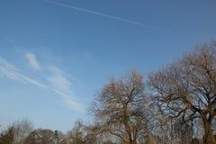 Ветви дерева против голубого неба Стоковые Изображения