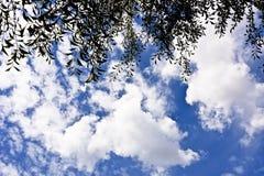 Ветви дерева против неба с облаками Стоковые Фото