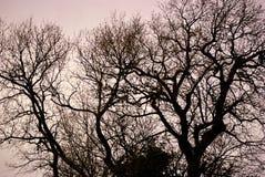 Ветви дерева против неба Стоковая Фотография RF