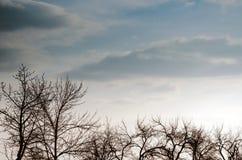 Ветви дерева против неба, Стоковые Фото