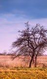 Ветви дерева против неба, Стоковые Изображения RF