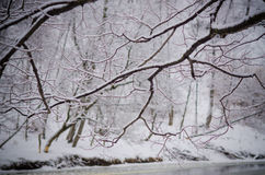 Ветви дерева реки Стоковые Фотографии RF