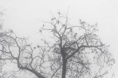 Ветви дерева силуэта в тумане Стоковые Изображения