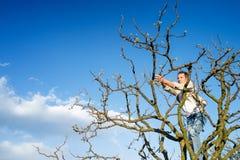 Ветви дерева старшего человека подрезая против голубого неба с облаками Стоковые Фото