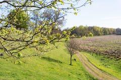 Ветви дерева с бутонами весной Стоковое Изображение