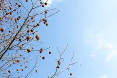 ветви дерева с небом на предпосылке Стоковые Фото
