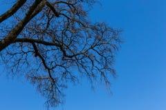 Ветви дерева с голубым небом Стоковое Изображение