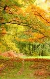Ветви дерева с листьями зеленого цвета и желтого цвета Стоковые Изображения
