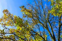 Ветви дерева с красочными листьями Стоковое Изображение