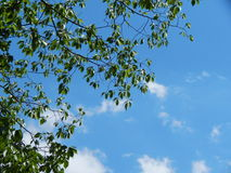 Ветви дерева с облаками в небе Стоковое Изображение