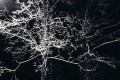 Ветви дерева с снегом на ноче Стоковые Изображения RF