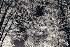 Ветви дерева с снегом на ноче Стоковое Фото