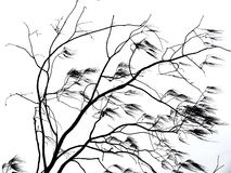 Ветви дерева дуя в ветре Стоковые Фотографии RF