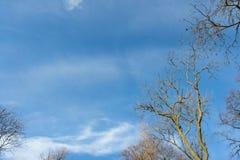 Ветви дерева чуть-чуть против голубого неба Стоковая Фотография RF