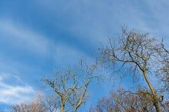 Ветви дерева чуть-чуть против голубого неба Стоковые Фото