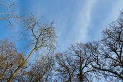 Ветви дерева чуть-чуть против голубого неба Стоковые Фотографии RF
