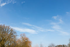 Ветви дерева чуть-чуть против голубого неба Стоковое Изображение