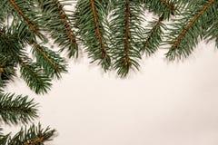 Ветви дерева стоковое фото rf