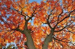 Ветви дерева Balaton озера ramifying Стоковое Изображение