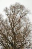 Ветви деревьев без листьев Стоковые Изображения