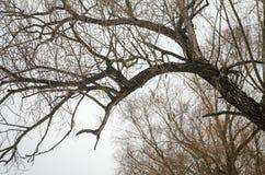 Ветви деревьев без листьев Стоковые Изображения RF