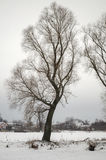 Ветви деревьев без листьев Стоковое Изображение