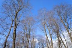 Ветви деревьев без листьев Стоковая Фотография