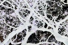 Ветви деревьев в черно-белом, Стоковые Фото