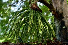 Ветви деревьев который стоковые фотографии rf