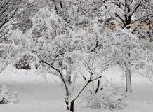 Ветви деревьев покрытых с снегом Стоковые Фотографии RF