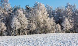 Ветви деревьев с снегом Стоковое Изображение RF