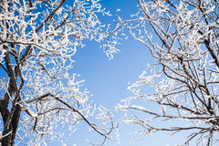 Ветви деревьев формируют форму сердца Стоковое Изображение RF
